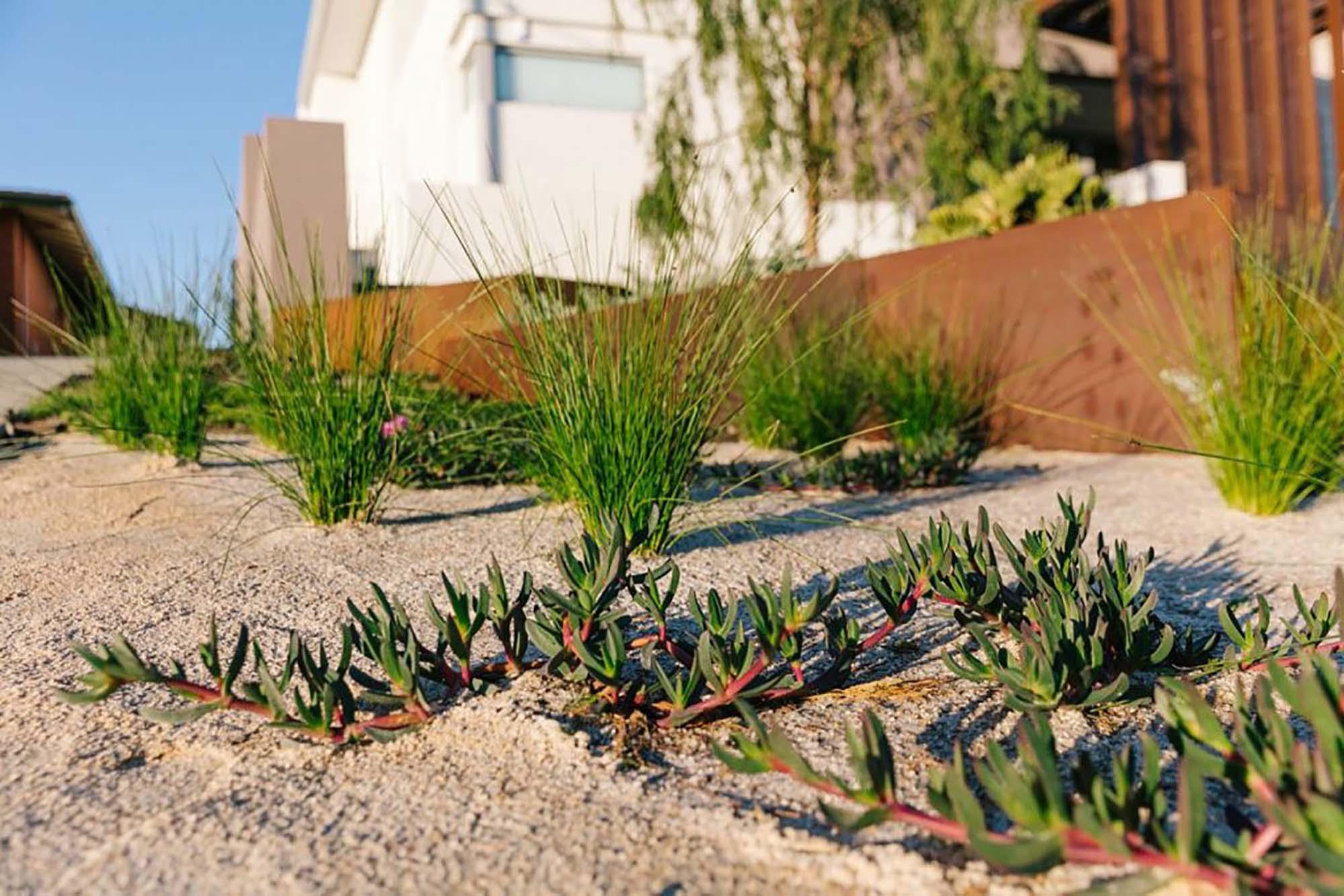 Sorrento Landscaping (3)